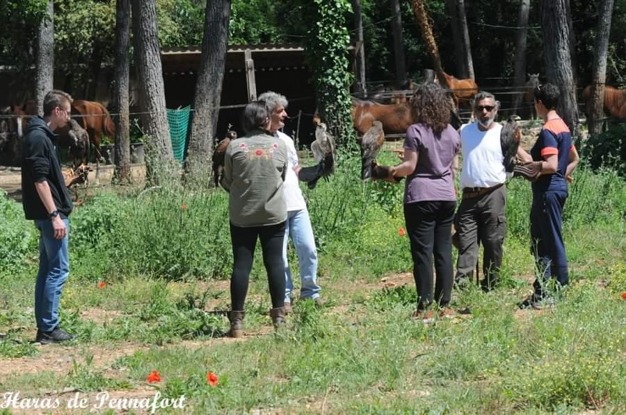 Des chevaux et des faucons Fb_img20