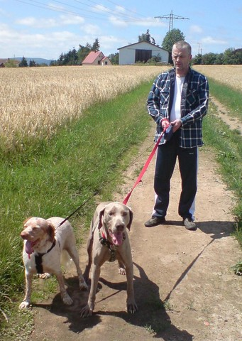 Nouvelles des chiens partis le 25 juin pour l'Allemagne 15_cop10