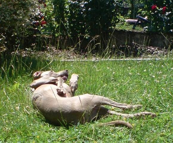 Nouvelles des chiens partis le 25 juin pour l'Allemagne 25_cop10
