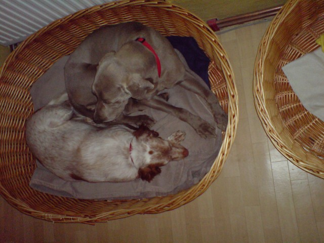 Nouvelles des chiens partis le 25 juin pour l'Allemagne 2_copi10