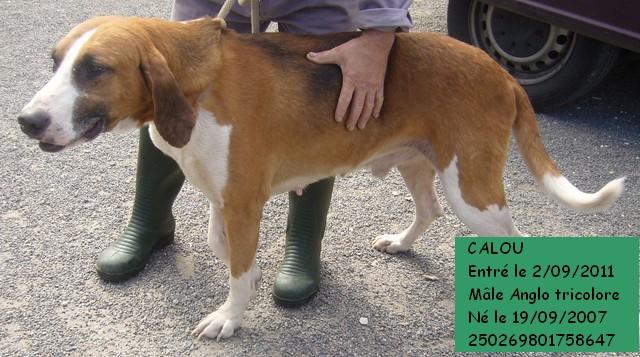 CALOU Anglo 250269801758647 Caloub10