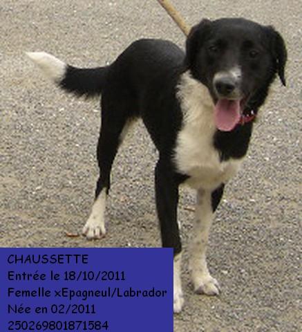 CHAUSSETTE xEpagneul/Labrador 250269801871584 Chauss10