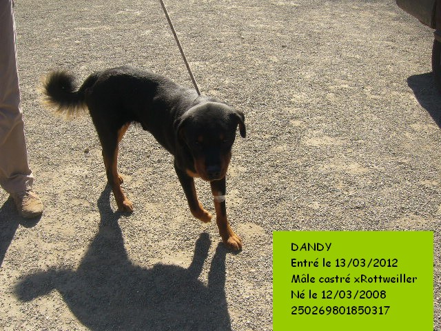 DANDY xRottweiller 250269801850317 Dandy110