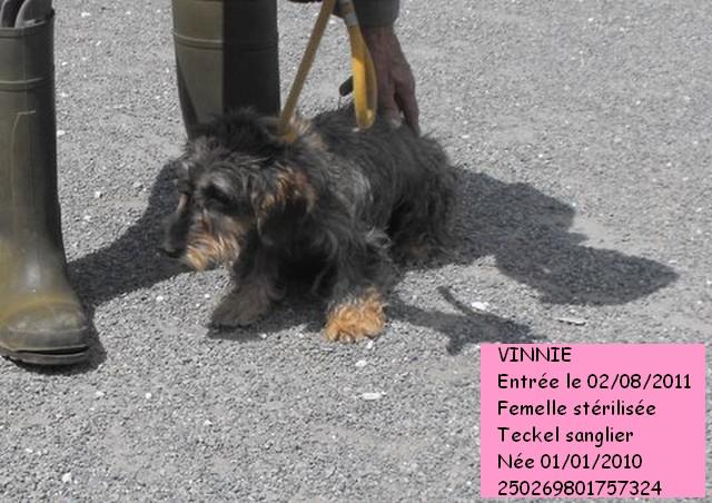 VINNIE Teckel sanglier 250269801757324 Dscf3213
