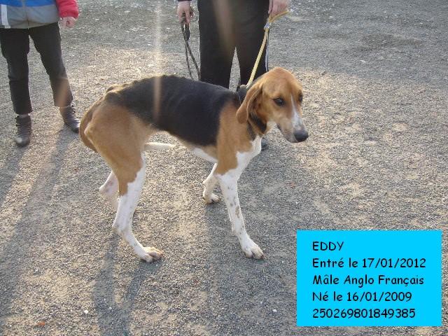 EDDY Anglo Français 250269801849385  Eddybu10