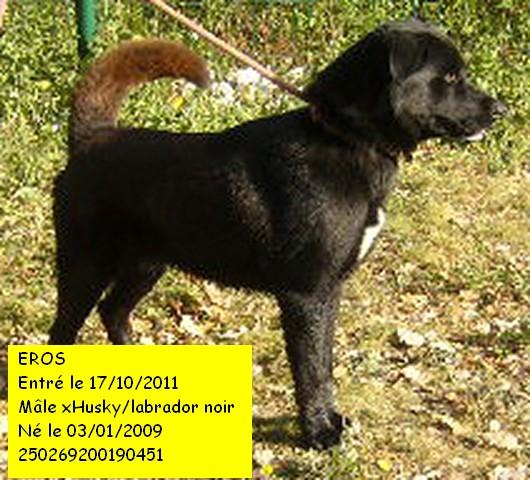 EROS xHusky/Labrador noir 250269200190451  Eros2_10