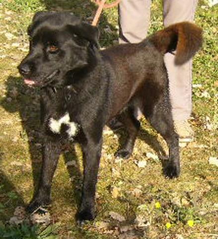 EROS xHusky/Labrador noir 250269200190451  Eros3_10