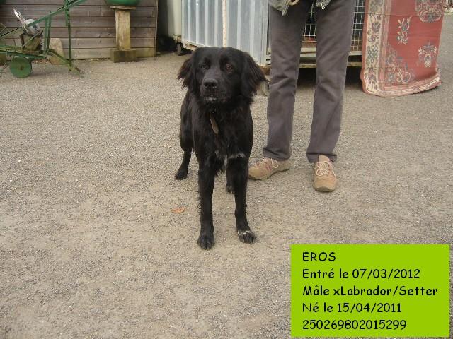 EROS xLabrador/Setter 250269802015299 Eros3b10
