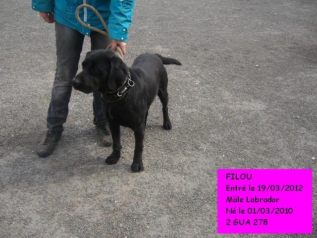 FILOU Labrador noir 2GUA278 en CA Filou212