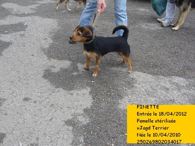 FINETTE xJagd Terrier 250269802034017 en CA Finett10