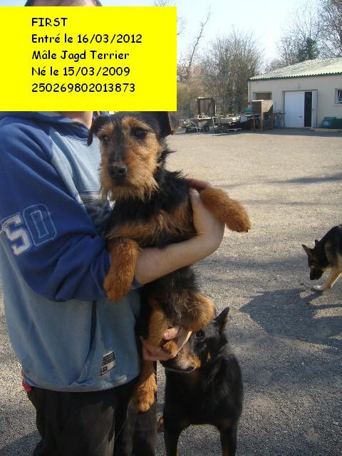 FIRST Jagd Terrier 250269802013873 First110
