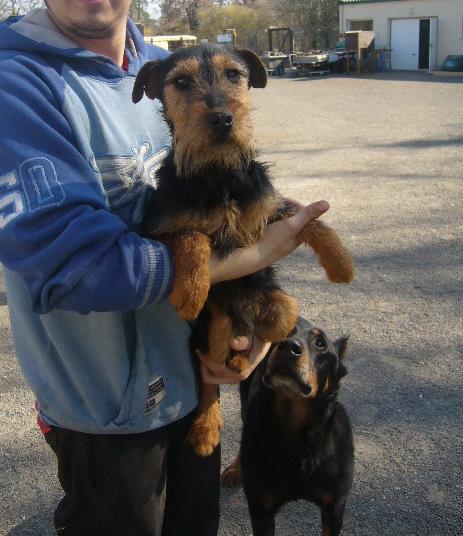 FIRST Jagd Terrier 250269802013873 First210