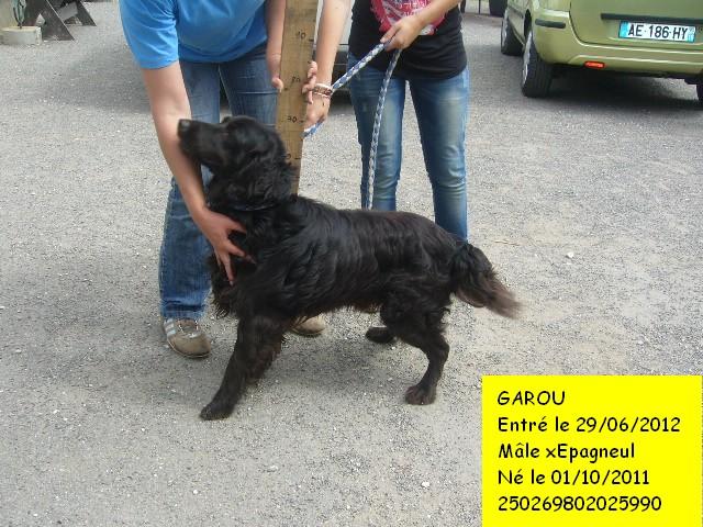GAROU xEpagneul noir 250269802025990 Garou211