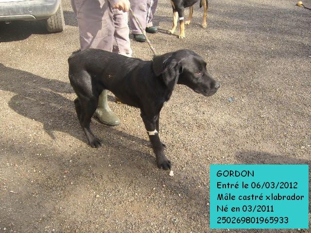 GORDON xLabrador 250269801965933 Gordon11