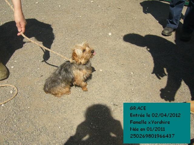GRACE xYorkshire 250269801966437 Grace510