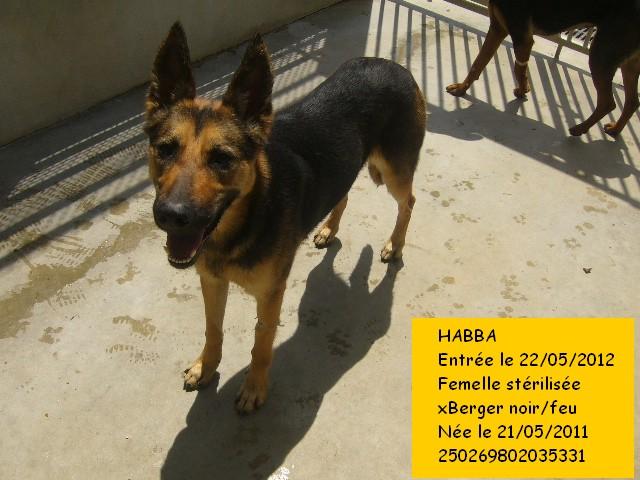 HABBA xBerger 250269802035331 Habba610