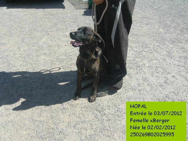 HOPAL xBerger bringée 250269802025995 Hopal210