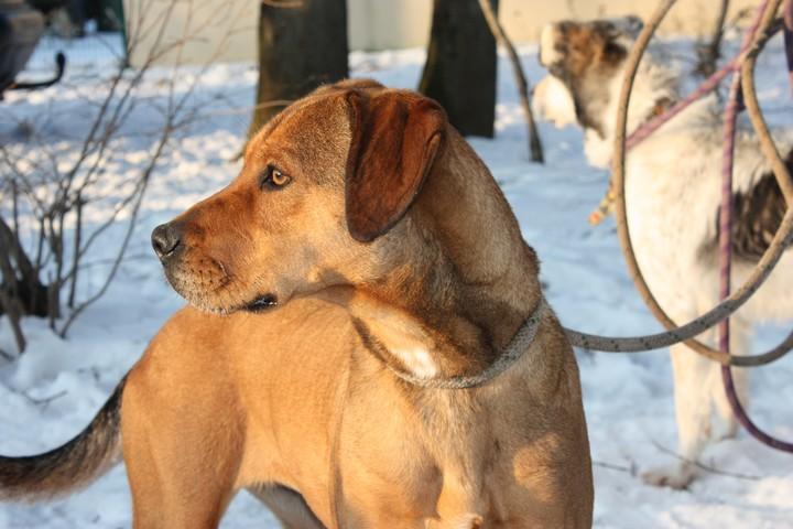 DAMIA Croisée Labrador fauve 2GTE723 Img_6224