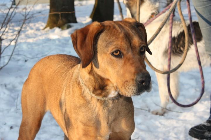 DAMIA Croisée Labrador fauve 2GTE723 Img_6225