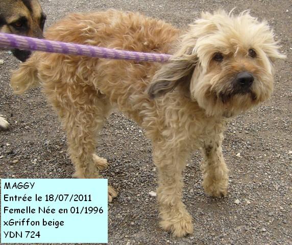 Des nouvelles des chiens partis en novembre 2011 vers l'Allemagne P1090319