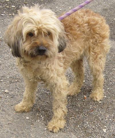 Des nouvelles des chiens partis en novembre 2011 vers l'Allemagne P1090320