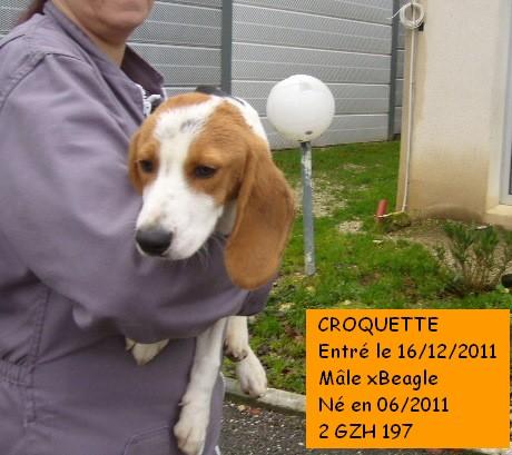 CROQUETTE xBeagle 2GZH197 P1110122