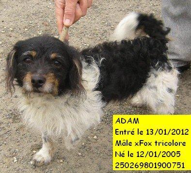 ADAM xFox tricolore 250269801900751 en CA P1110410