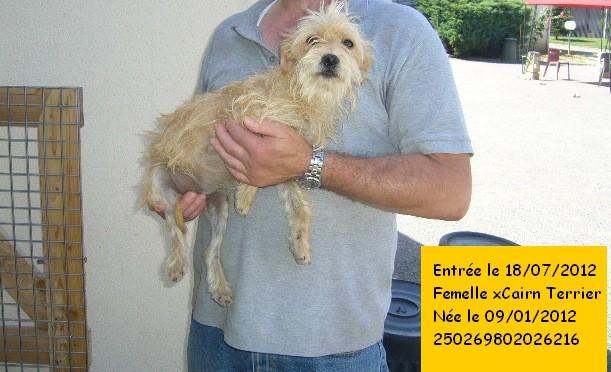 xCairn Terrier 250269802026216 P1130349