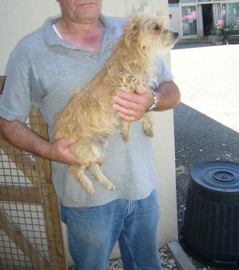 xCairn Terrier 250269802026216 P1130350