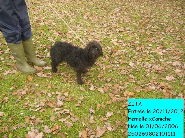 ZITA xCaniche noire 250269802101111 en CA le 24/11/2012 P1140516