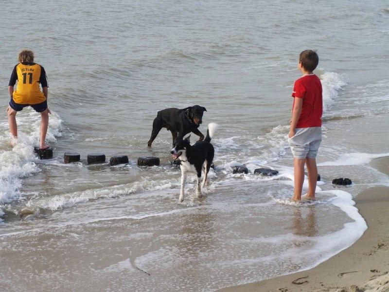 Nouvelles des chiens partis le 18 septembre  Pa270010