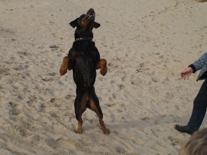 Nouvelles des chiens partis le 18 septembre  Pa270110