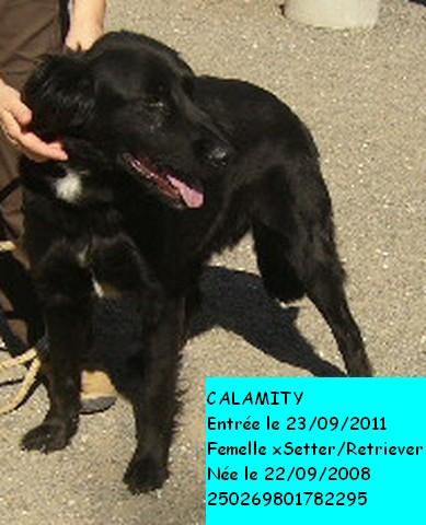 CALAMITY xSetter/Retriever 250269801782295 Photo100