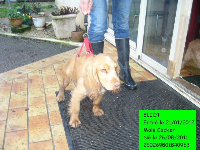 ELIOT Cocker 250269801840963 Photo127