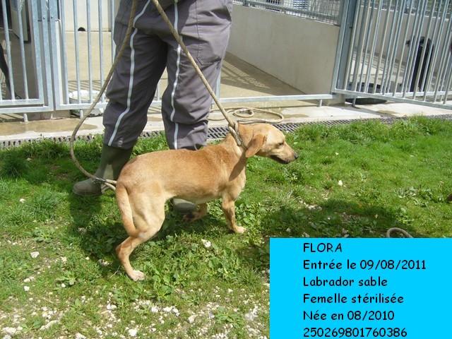 FlORA Labrador sable 250269801760386 Photo_48