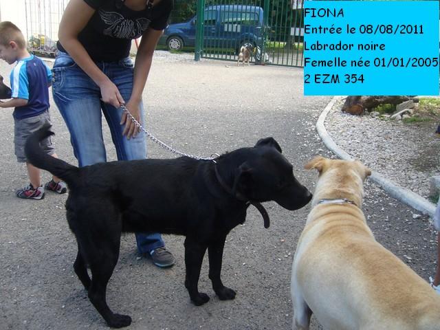 FIONA Labrador noire 2EZM354 Photo_51