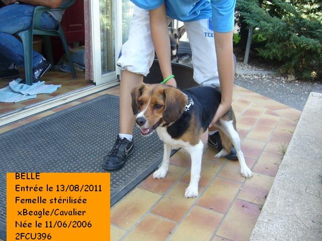 BELLA xBeagle/Cavalier 2FCU396 en CA le 22 Octobre Photo_92