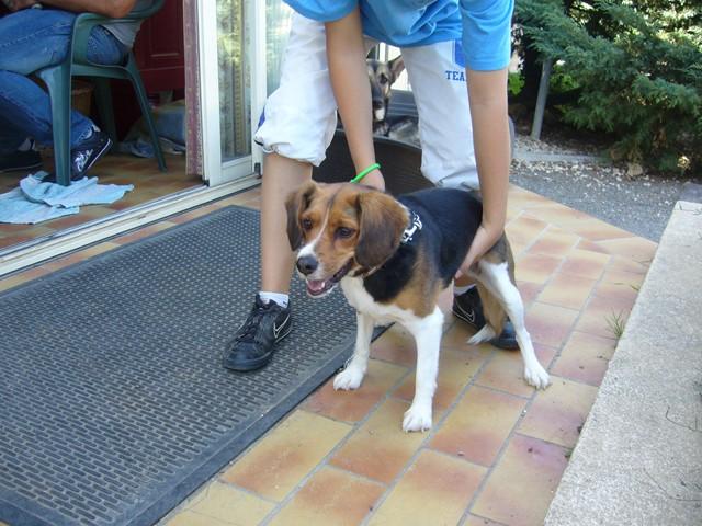 BELLA xBeagle/Cavalier 2FCU396 en CA le 22 Octobre Photo_93
