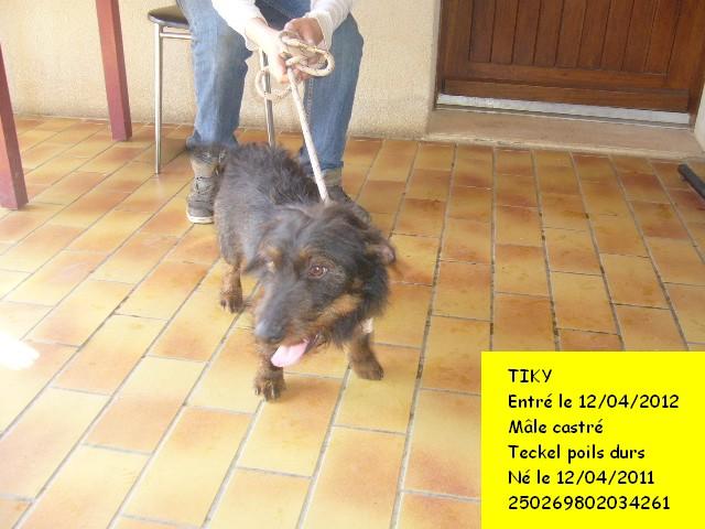 TIKI Teckel 250269802034261 en CA Tiky6b10