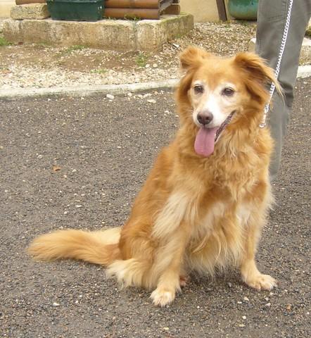 Des nouvelles des chiens partis en novembre 2011 vers l'Allemagne Tina1_10