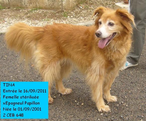 Des nouvelles des chiens partis en novembre 2011 vers l'Allemagne Tina_c12