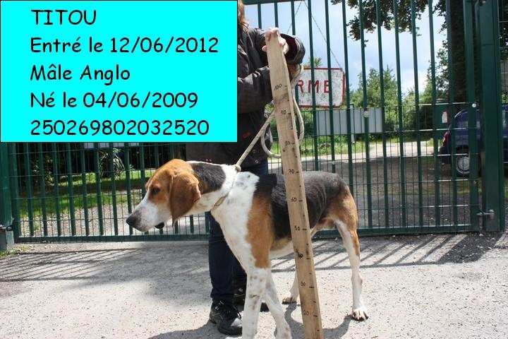 TITOU Anglo tricolore 250269802032520 Titou110