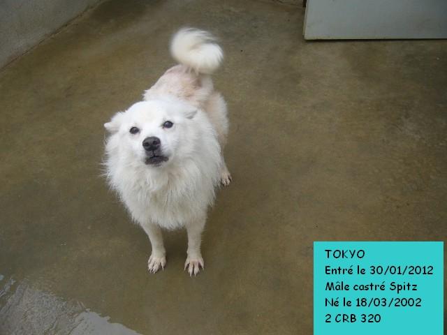 TOKYO Spitz blanc 2CRB320 Tokyo110