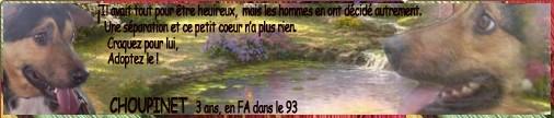 FLEUR FEMELLE TAILLE MOYENNE NEE LE  03/09/2011 EN FA DANS LE 95  -ne pas diffuser svp Choupi11