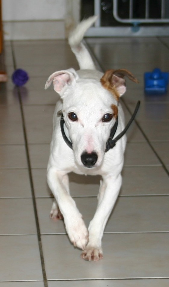 DRAKO, 3 ans et 5 kg (dpt 92) URGENT Coocki13