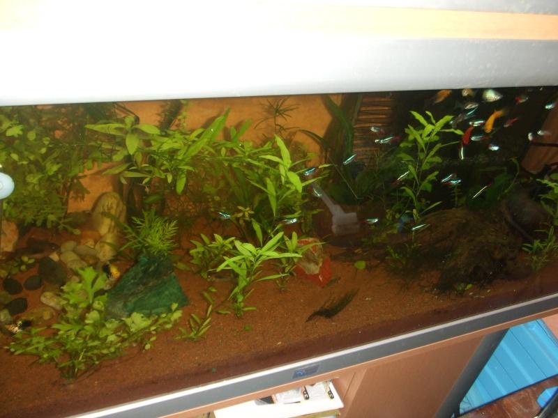ENFIN!!! lancement de mon aquatlantis ambiance 101 (180L) Dscf0916