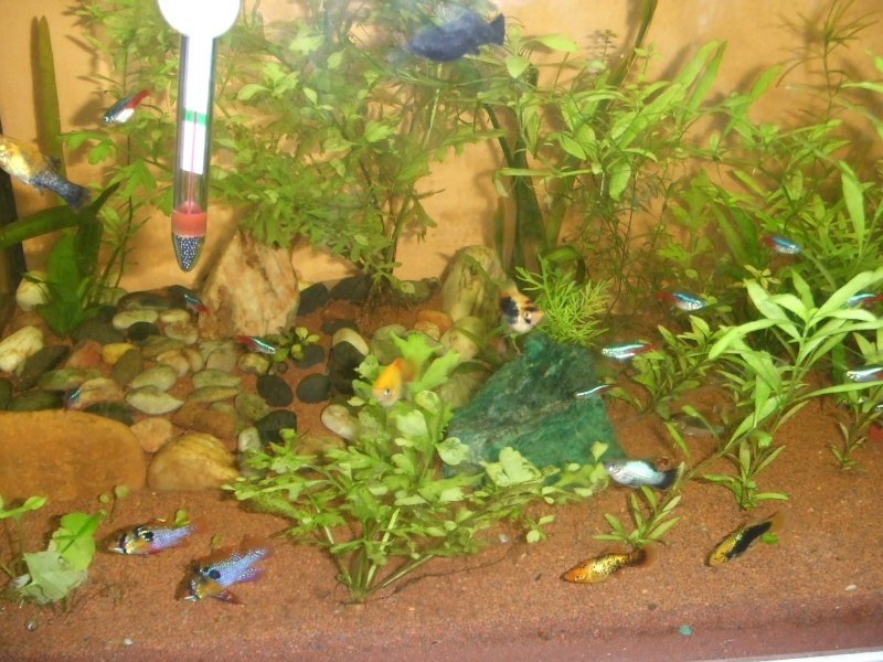ENFIN!!! lancement de mon aquatlantis ambiance 101 (180L) Dscf0917