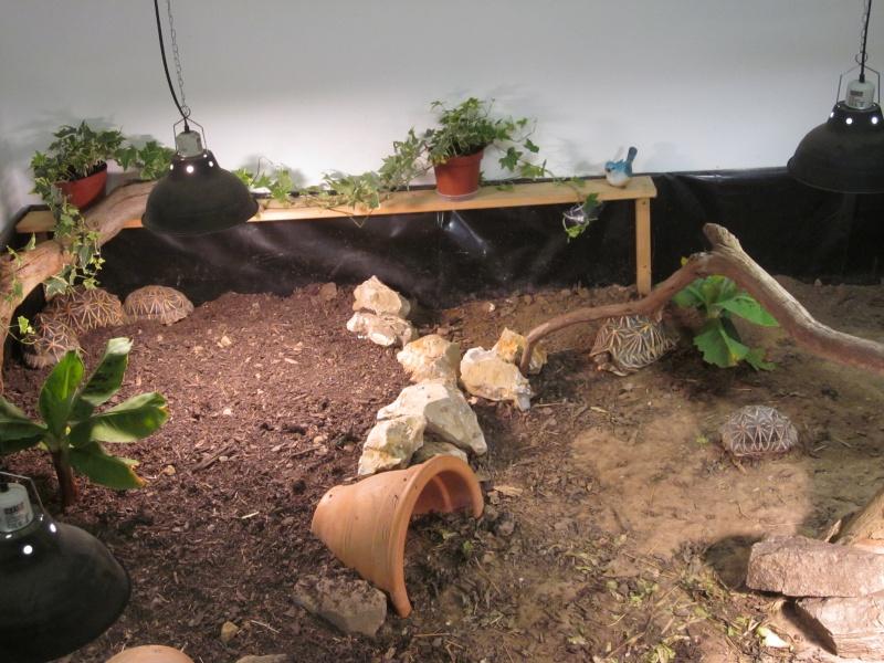 regroupement ici de vos terrariums et serres Img_0614
