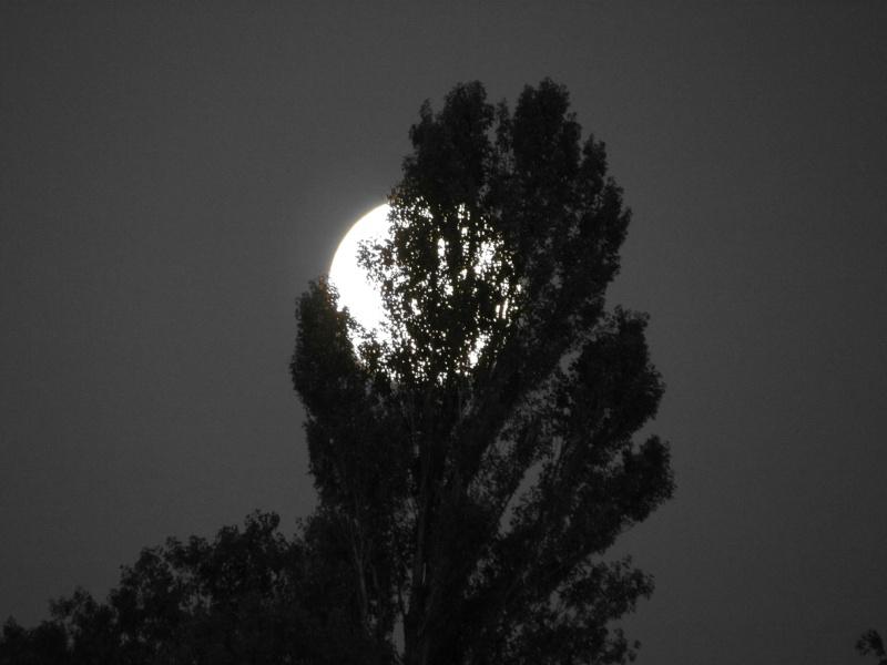 Une nuit particulière.... Rhone_15