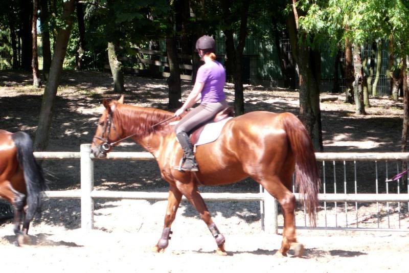 Votre style (ou dégaine) à cheval ? L1220510